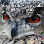 Goddess Lakshmi's Vaahan Has its Day too