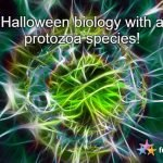 Halloween Biology with a Protozoa Species