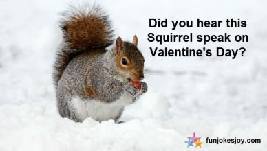 How Squirrels Squeak on Valentine's Day