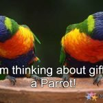 Never Ever Gift a Parrot on Valentine Day