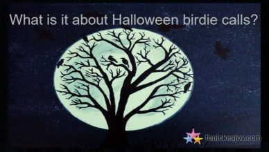 What is it about Halloween Birdie Calls?