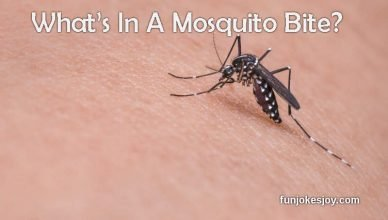 What's In A Mosquito Bite?