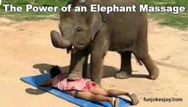 The power of an Elephant Thai massage