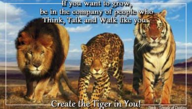 Create the tiger in you
