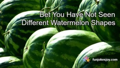 Bet You Have Not Seen Different Watermelon Shapes