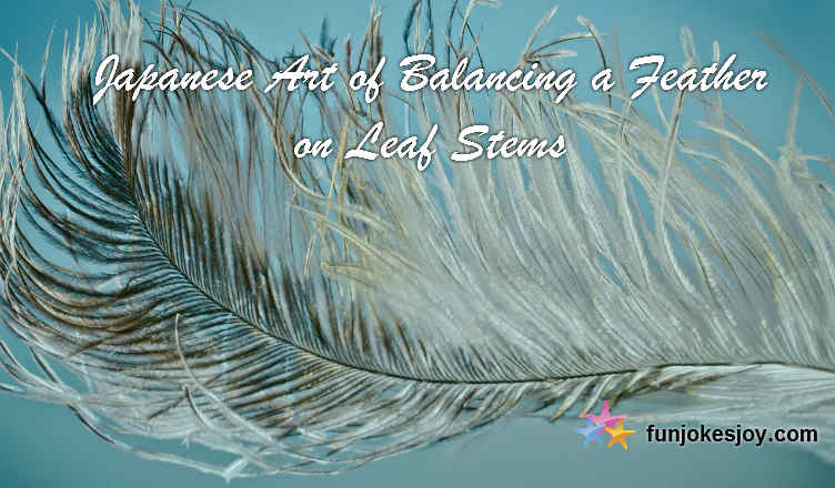 Japanese Art of Balancing a Feather on Leaf Stems