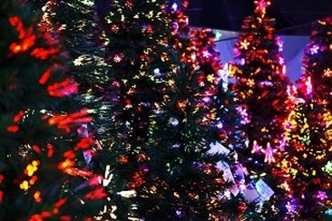 Christmas trees with colored lights