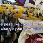 Can You Use Colorful Sweet Corn Cobs for Decoration