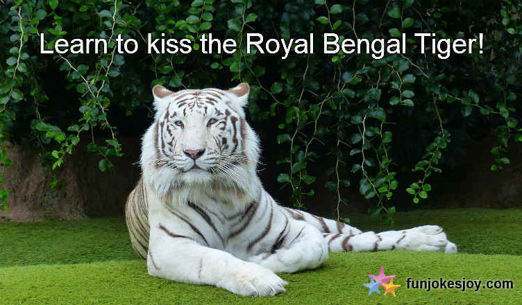 How to Kiss a Royal Bengal Tiger and Play with Him