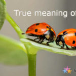 Let's understand the true meaning of love!