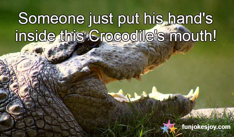 Thailand's Live Crocodile Show - Can You Do It?