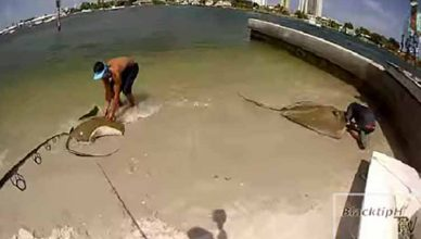 Life with Giant Stingray Fishes Can Be Really Dangerous