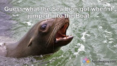 The Sea Lion Smartness did not go in Vain